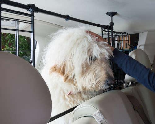 Dog Guard Mesh